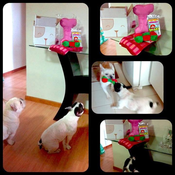dogbox atenção
