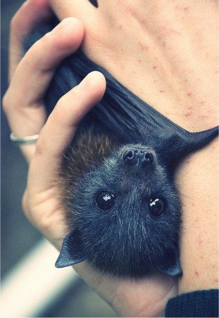 morcego agarrado
