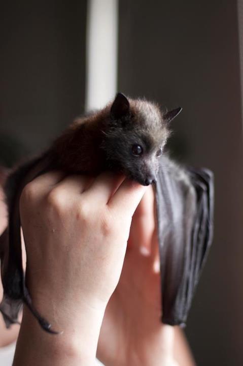 morcego mão